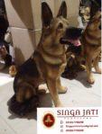 Jual Patung Shio Anjing Patung Anjing Dari Kayu